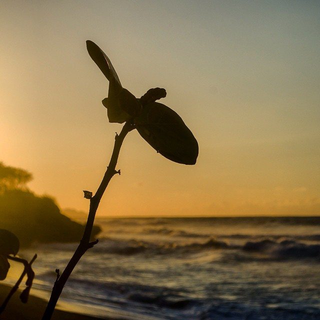 Just a plant in the Puerto Rican sunset. #rivercityphotographyinstagram #sunset #beach #picoftheday #puertorico #rincon - From Instagram